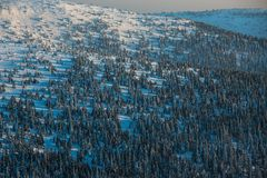 Winter mountain forest royalty free stock image