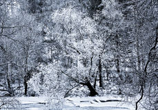 Winter in a mountain gorge Stock Photography