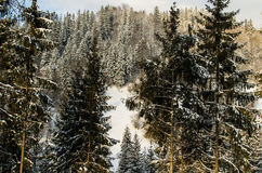 Winter mountain hills and magic trees covered by snow, Carpatian. Winter mountain hills and wairytale forest, covered by snow, Carpatians, Ukraine Stock Images
