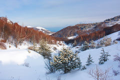 Winter mountain landscape with frozen trees Stock Photography