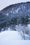 Winter mountain landscape with frozen trees Stock Photos