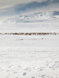 Winter mountain landscape with reindeer Royalty Free Stock Image