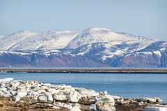 Mountain landscape, Magadan. Winter mountain landscape the Sea of Okhotsk, Magadan, Russia Royalty Free Stock Image
