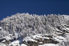 Winter mountain landscape with snow-covered trees Stock Photos