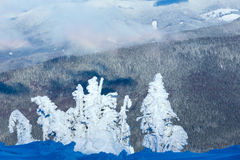 Winter mountain landscape with snowy trees stock photos