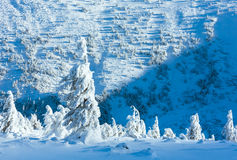 Winter mountain landscape with snowy trees Stock Images