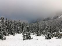 Winter Mountain Landscape. Spruces Sprinkled with Snow. Fog over the Woods. stock image