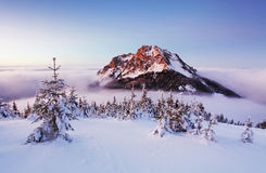 Winter mountain landscape with tree Stock Photo