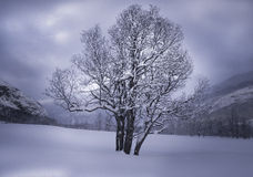 Winter mountain landscape with a tree Royalty Free Stock Images
