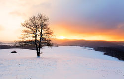 Winter mountain landscape with tree at sunset Royalty Free Stock Images