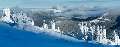 Winter mountain panorama with snowy trees Stock Images
