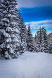 Winter mountain path in the woods Stock Photos