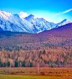 Winter on mountain ridge Stock Image