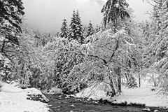 Forest and river under the snow in Chartreuse Black and white stock image