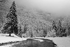 Forest under the winter clouds in Chartreuse Black and white stock photos