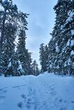 Snowy footpath in forest in mountains in cold winter day. Winter mountain scene. Lots of snow and cold winter day. Snowy trees. Ffootpath going through forest up royalty free stock photo