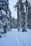Snowy footpath in forest in mountains after heawy snowfall. Winter mountain scene. Lots of snow and cold winter day. Snowy trees. scenery after heawy snowfall stock photography