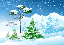 Winter mountain scenery. Mountain landscape in winter. Snow-covered spruce and pine Stock Photos