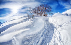 Winter mountain scenery. With tree at blue sky with sun stock photography