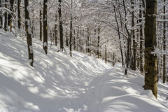 Winter mountain scenery in Bieszczady mountains Royalty Free Stock Image