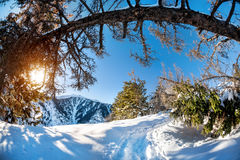 Winter mountain scenery Stock Image