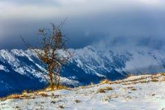 Winter mountain shrub with Piatra Craiului mountain in backgroun Royalty Free Stock Photo