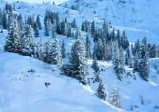 Winter mountain slope with firs. Royalty Free Stock Photography