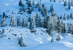 Winter mountain slope with firs. Royalty Free Stock Photos
