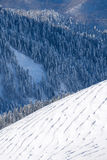 Winter mountain slope and forest Stock Images