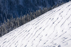 Winter mountain slope and forest Royalty Free Stock Photo