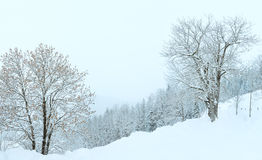 Winter mountain snowfall landscape Royalty Free Stock Images