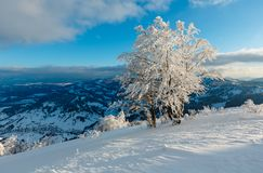 Winter mountain snowy evening landscape. Evening winter calm mountain landscape with beautiful frosting trees and snowdrifts on slope Carpathian Mountains Stock Photography