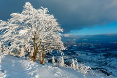 Winter mountain snowy evening landscape. Evening winter calm mountain landscape with beautiful frosting trees and snowdrifts on slope Carpathian Mountains Royalty Free Stock Images