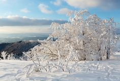 Winter mountain snowy landscape. Evening winter calm mountain landscape with beautiful frosting trees and snowdrifts on slope Carpathian Mountains, Ukraine Stock Photo
