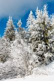 Winter mountain snowy landscape. Winter calm mountain landscape with beautiful frosting trees and snowdrifts on slope Carpathian Mountains, Ukraine Stock Image