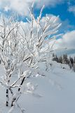 Winter mountain snowy landscape. Winter calm mountain landscape with beautiful frosting trees and snowdrifts on slope Carpathian Mountains, Ukraine Royalty Free Stock Photography