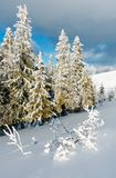 Winter mountain snowy landscape. Winter calm mountain landscape with beautiful frosting trees and snowdrifts on slope Carpathian Mountains, Ukraine. Skiers are Stock Image