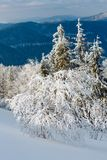 Winter mountain snowy landscape. Winter calm mountain landscape with beautiful frosting trees and snowdrifts on slope Carpathian Mountains, Ukraine Stock Photography