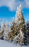 Winter mountain snowy landscape Royalty Free Stock Photography