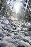 Winter mountain stream. Royalty Free Stock Photo