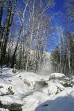 Winter mountain stream. Stock Photos