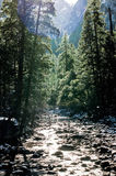 Winter Mountain Stream. In the morning Royalty Free Stock Image