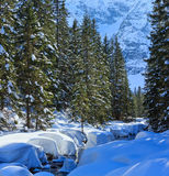 Winter mountain stream. Stock Images