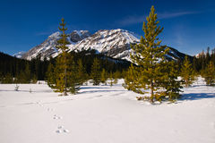 Winter Mountain Views Stock Image