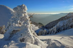Winter mountain landscape. Snow at high altitude - Ciucas Mountains, landmark attraction in Romania Royalty Free Stock Photography