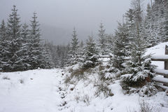 Winter in mountains. A frosty day is in mountains Stock Image