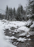 Winter in mountains. A frosty day is in mountains Stock Photography