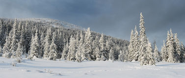 Winter in mountains. A frosty day is in mountains Royalty Free Stock Image