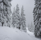 Winter in mountains. A frosty day is in mountains Stock Photo