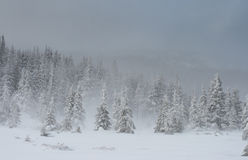 Winter in mountains. A frosty day is in mountains Royalty Free Stock Photo